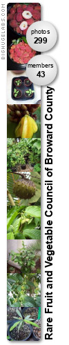 Rare Fruit and Vegetable Council of Broward County. Get yours at bighugelabs.com
