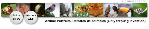 Animal Portraits. Retratos de animales (Only throuhg invitation)